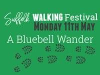 A Bluebell Wander